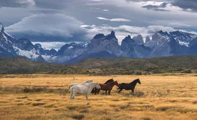 The Wild Patagonia Collection