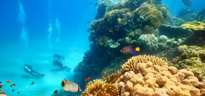 Climate change crippling marine life: wildlife official