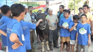 7 Indonesian kids buy sacrificial cow after saving a year